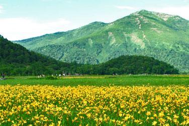 尾瀬国立公園(特別天然記念物)
