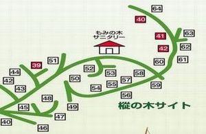 樅の木サイトマップ