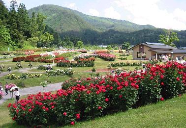 東沢バラ公園 バラまつり2019 日本一のバラ公園 | 東沢バラ公園 ...